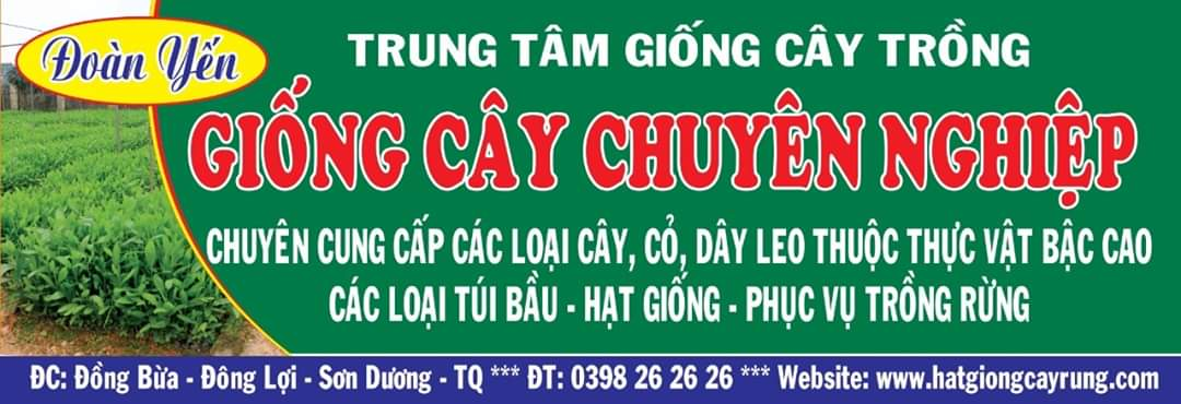 hat-giong-cay-rung